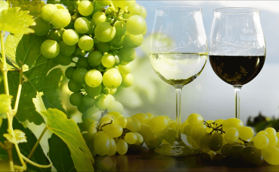 Domaine Piccard Bio Wines, Lavaux, Switzerland