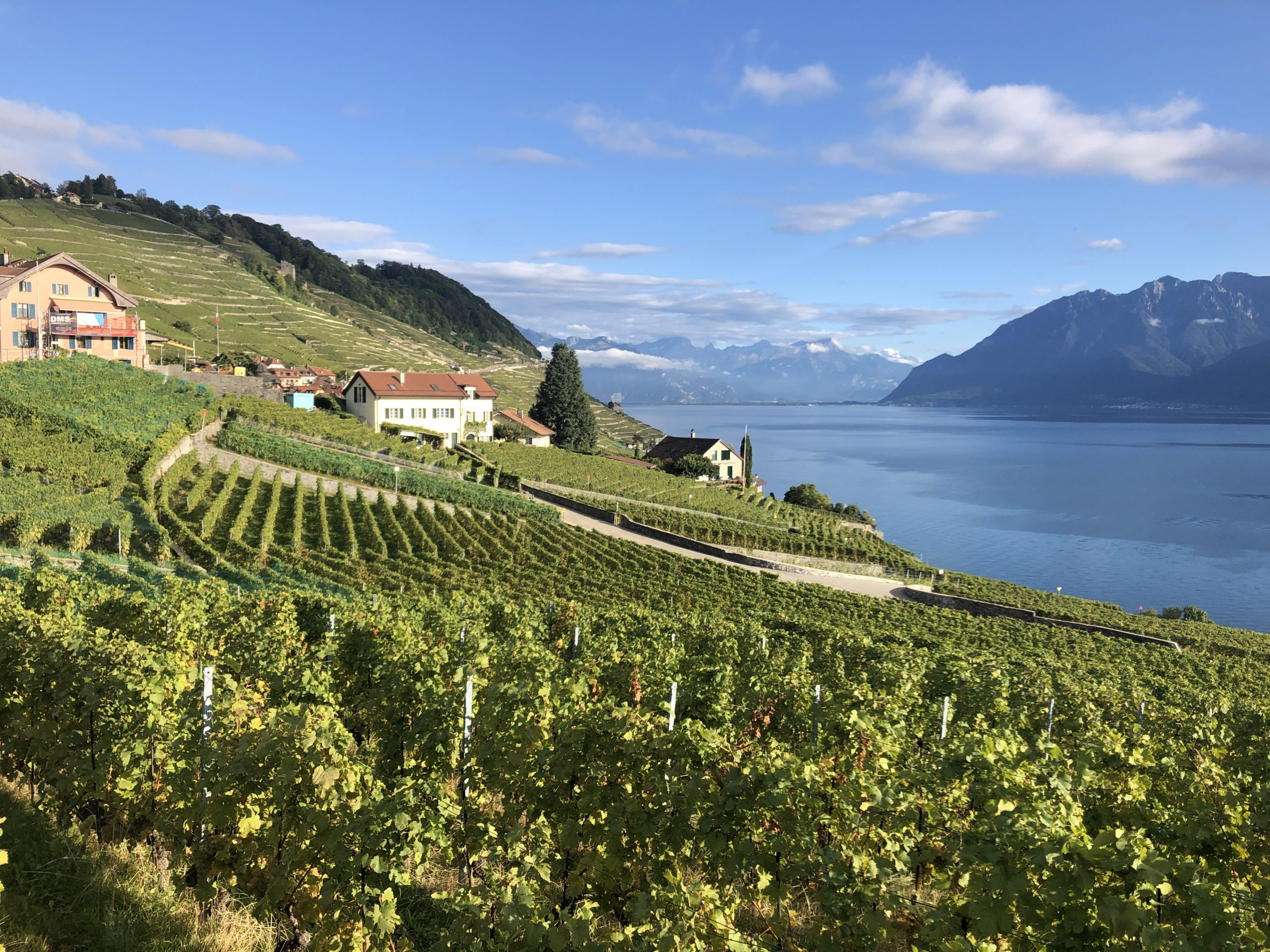 View From Epesses Lavaux Switzerland