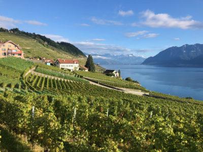 Lavaux-Switzerland